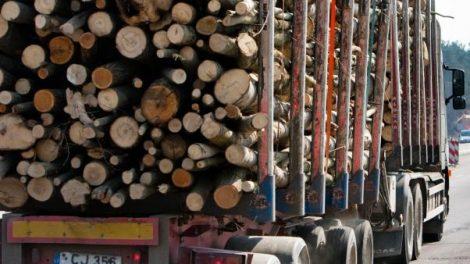 Apvaliosios medienos siuntėjų dėmesiui