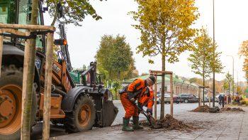 A. Smetonos alėją Kaune jau puošia nauji medžiai, darbai pradėti ir Miško gatvėje
