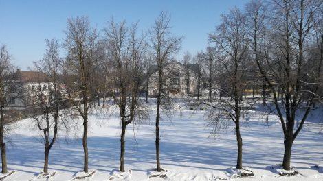 Kokie medžiai augs Pakruojo Vienybės aikštėje?
