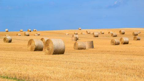 Dėl nemokėtų mokesčių žemės ūkio bendrovės vadovas sės į teisiamųjų suolą