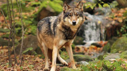 Priimamos paraiškos medžiojamųjų gyvūnų daromos žalos prevencinėms priemonėms diegti Anykščių rajone