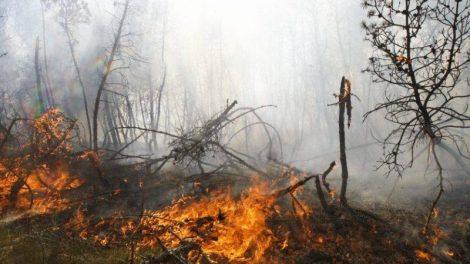 Druskininkų gyventojų ir kurorto svečių dėmesiui: miškuose labai sausa