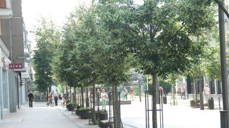 Nuspręsta, kaip bus laistomi jauni miesto medžiai
