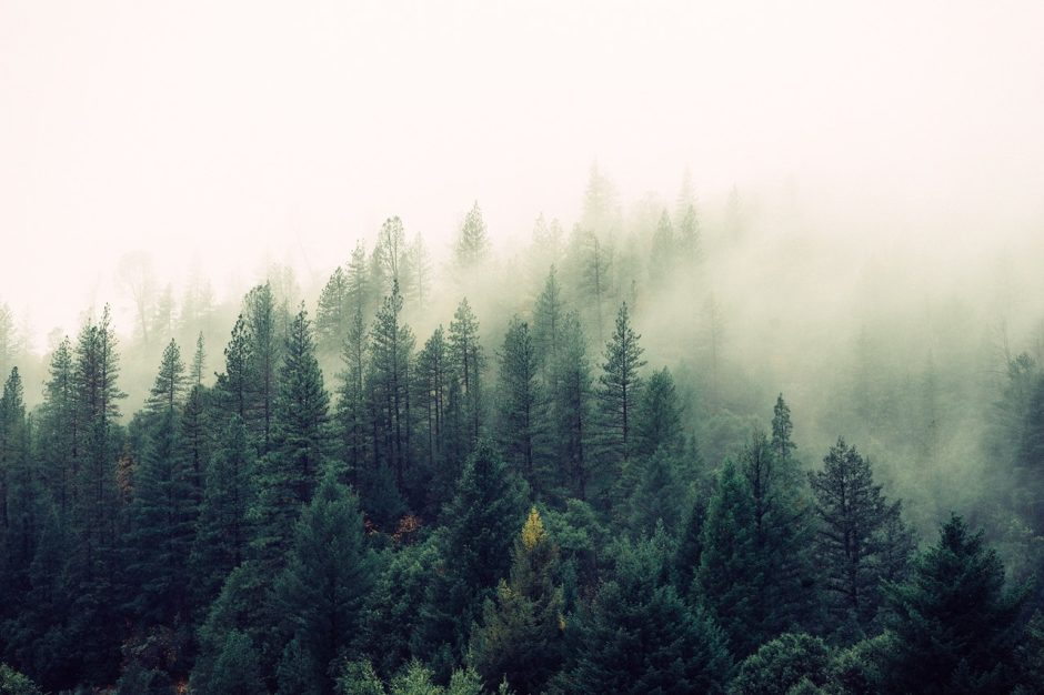 Apribotas fizinių asmenų lankymasis Varėnos rajono miškuose