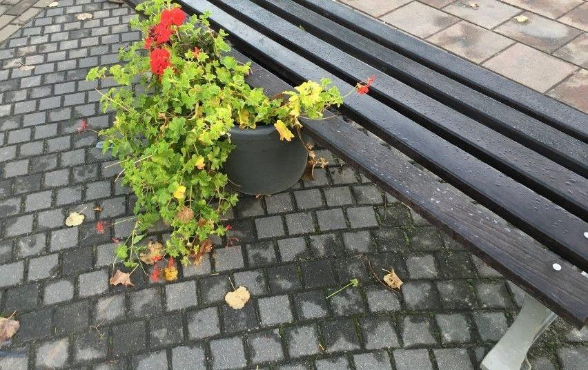 Ieškomas Mažeikiuose gėlių vazoną apgadinęs asmuo