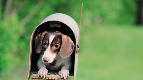 Politinės reklamos į pašto dėžutes neturėtų gauti to nepageidaujantys asmenys