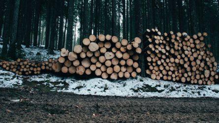 Įmonės direktorius apgaulės būdu įgijęs medienos už daugiau nei 30 000 eurų – stos prieš teismą