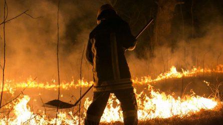 Žolės gaisrai – skaudus smūgis bundančiai gamtai