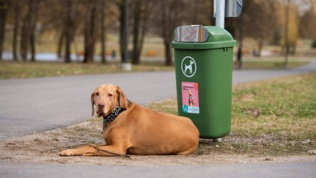 Kaunas šunų savininkams žaismingai primena jų pareigas miesto aplinkai