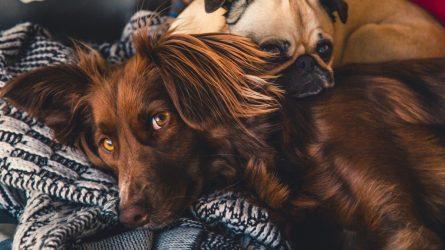 Draugas, bet šunybes krečia
