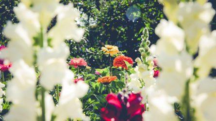 Pavasaris pražydo gėlėmis