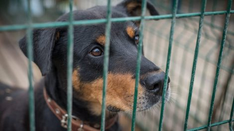 Likimo nuskriaustiems gyvūnams reikalinga kantrybė, meilė ir globa