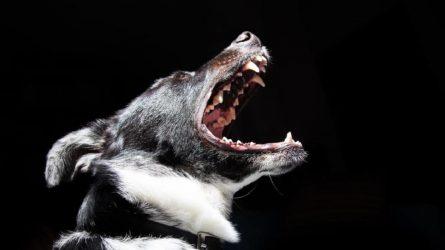 Ką daryti jei jums įkando ar apdraskė gyvūnas? O jei dar įtariate kad jis serga pasiutlige