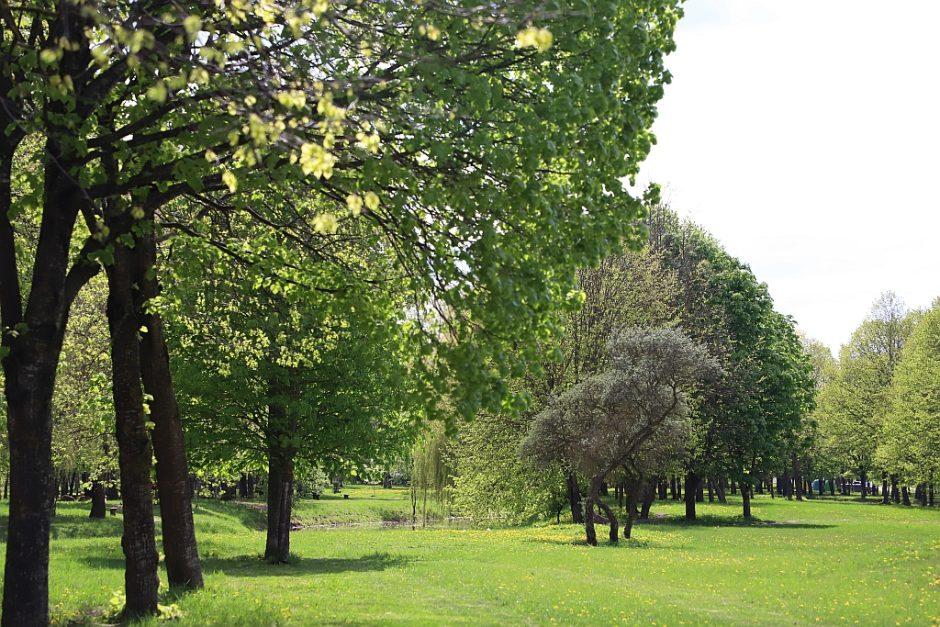 Naujas parkų priežiūros modelis Šiauliuose pasiteisino