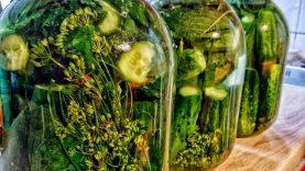 Kaip raugti agurkus žiemai - receptas pradedantiesiems