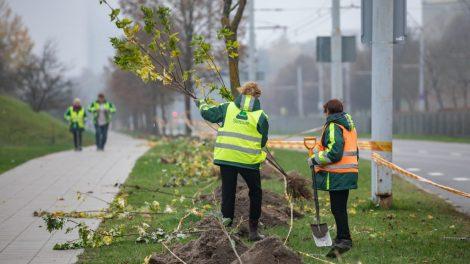 Vilniuje sodinama daugiau kaip2 500 medžių ir krūmų