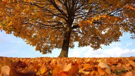 Giminės medžio kūrimas: klausti tėvų, senelių ir interneto