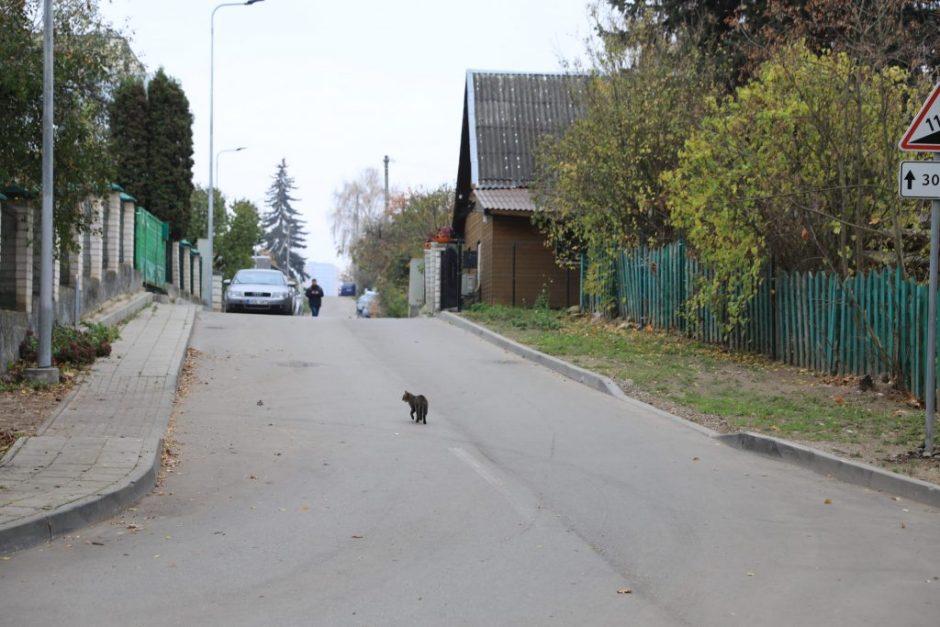 Šnipiškėse atsiras pirmoji bendrojo naudojimo (shared space) gatvė