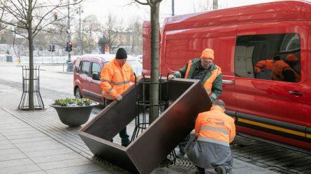 Naujas standartas rūpestingai medžių priežiūrai žiemą sostinėje