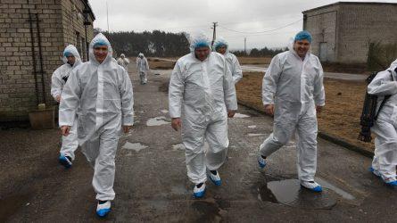 """Ministras A. Palionis: """"Nenuvertinkime paukščių gripo keliamos grėsmės"""""""