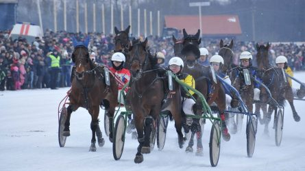 Šiemet Sartų žirgų lenktynės neįvyks