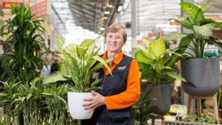 Ekspertė atskleidė 2020 metų kambarinių augalų tendencijas