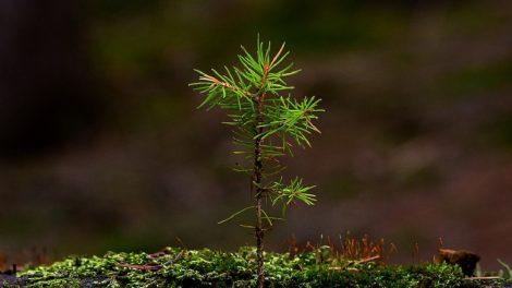 Kviečiame veisti miškus