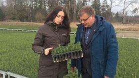 Moderniausiame šalies medelyne – net trys miško sėjinukų derliai per metus