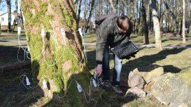 Dar kartą vertinta Gargždų parko medžių būklė