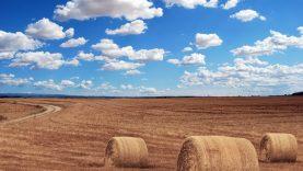 Ūkininkus ir supirkėją į teisiamųjų suolą atvedė pareigūnams įtarimą sukėlusi prekyba grūdais