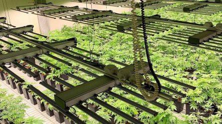 Investicijos į augalus – šansas tapti milijardinės rinkos dalimi