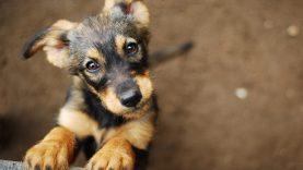 Rūpestį beglobiais gyvūnais Kaunas patikėjo naujai organizacijai