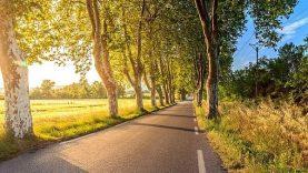 Medžių kirtimo ir genėjimo leidimų išdavimas