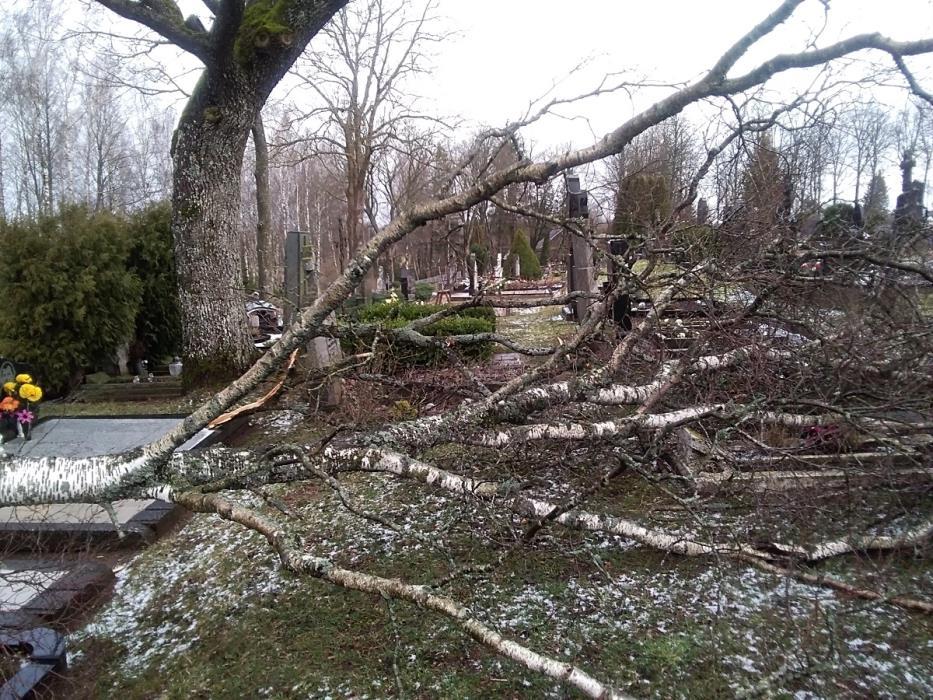 """Rajone siautėjęs vėjas vartė medžius, """"plėšė"""" stogus"""