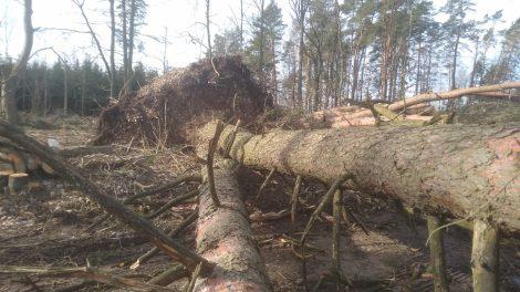 Uraganinis vėjas nuniokojo miškus