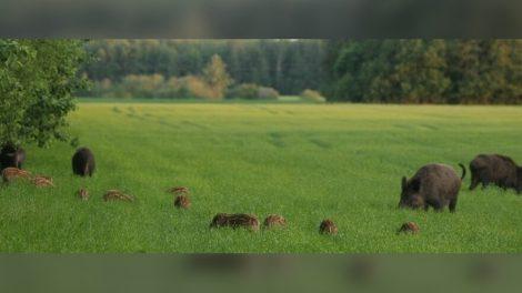 Finansinė parama medžiojamųjų gyvūnų daromos žalos prevencijos priemonėms  įgyvendinti