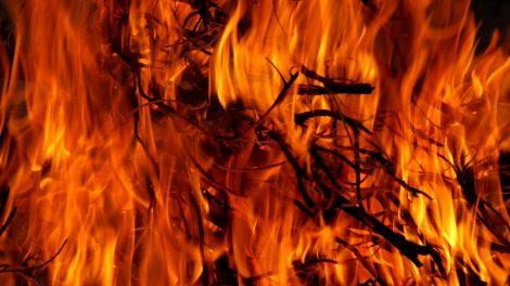 Lapus ir šakas draudžiama deginti  mieste