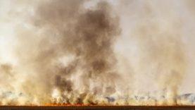 Žolės deginimas – žala gamtai, pavojus žmogui