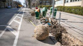 Naugarduko gatvėje suplanuota daug želdinių ir kitų gerų permainų pėstiesiems