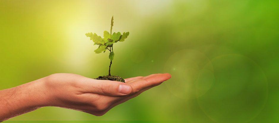Leista prekiauti sodinimui skirtais augalais, išduoti elektroninį parašą