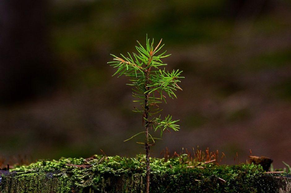 Miškininkai kviečiami saugoti miškus nuo stichinių nelaimių
