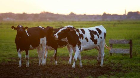 Svarbi informacija pieno gamintojams dėl Pieno gamybos ir realizavimo metinės deklaracijos