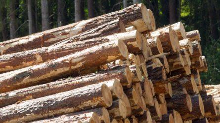 Dėl ekstremalios padėties poveikio ekonomikai pakeista ir prekybos žaliavine mediena tvarka