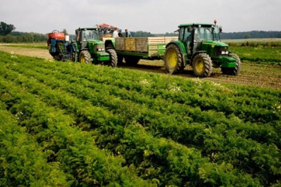 Žemės ūkio ministerija karantino metu neleis lenkų ūkininkams atvykti į Lietuvą dirbti ūkio darbų