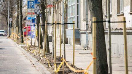 Žalesnis Vilnius: nuo ambicingo pavasarinio medžių sodinimo iki naujos želdynų strategijos