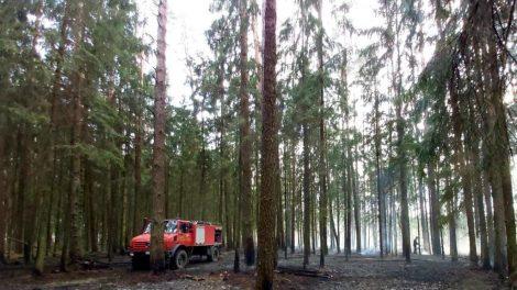 Patvirtintos naujos redakcijos Miškų priešgaisrinės apsaugos taisyklės