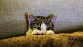 Vandos Kavaliauskienės katinų muziejui – 30 metų.