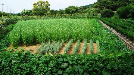 Ekologiškai ūkininkaujantiems – geros žinios