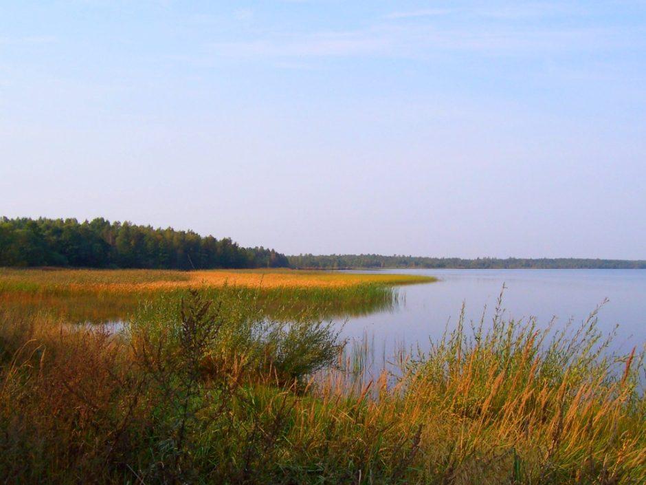 Taryba pritarė Rėkyvos pažintinio tako ir ežero apžvalgos aikštelės įrengimui