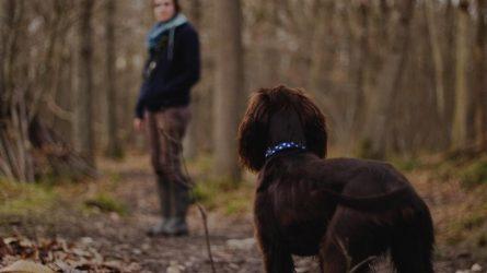 Tikrins, kaip vedžiojami šunys